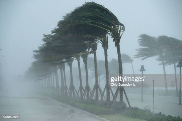 Trees bend in the tropical storm wind along North Fort Lauderdale Beach Boulevard as Hurricane Irma hits the southern part of the state September 10,...