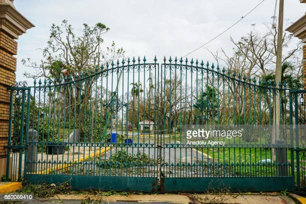 Trees block the main entrance at the University of Puerto Rico Rio Piedras campus after Hurricane Maria at Ponce de Leon Avenue in San Juan Puerto...