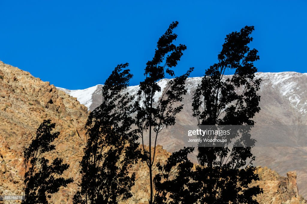 Trees blowing in wind near mountain : Foto stock