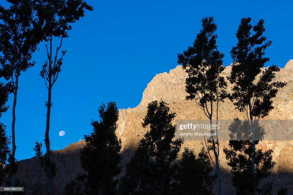 Trees blowing in wind near mountain : Foto stock