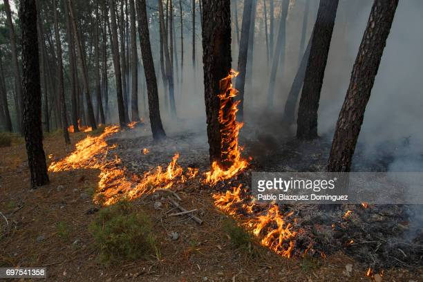 Trees burn after a wildfire took dozens of lives on June 19 2017 near Castanheira de Pera in Leiria district Portugal On Saturday night a forest fire...