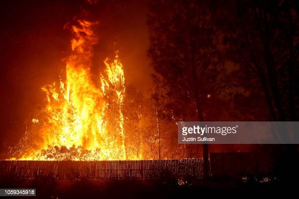 Trees burn as the Camp Fire moves through the area on November 8 2018 in Paradise California Fueled by high winds and low humidity the rapidly...
