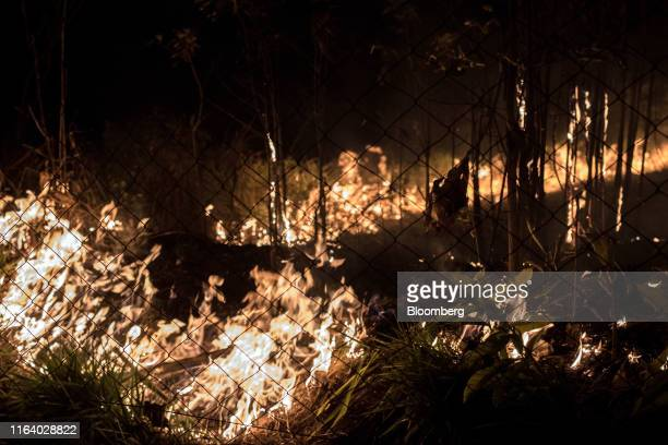 Trees burn during a fire close to the Madeira River in the Amazon rainforest near Porto Velho Rondonia state Brazil on Sunday Aug 25 2019 The world's...