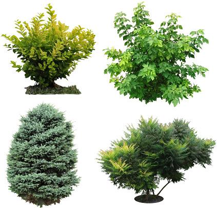 Trees, bushes izolated. 530693293