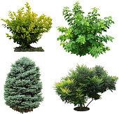 Trees, bushes izolated.