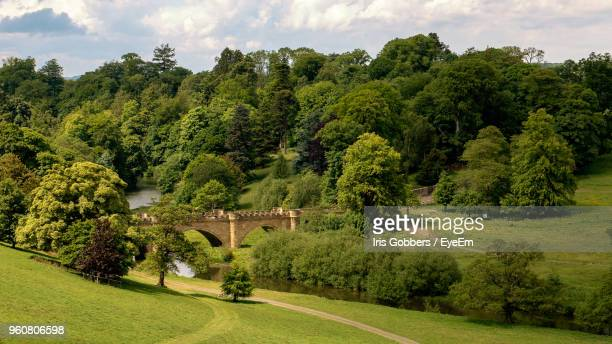 trees by arch bridge against sky - alnwick stock pictures, royalty-free photos & images