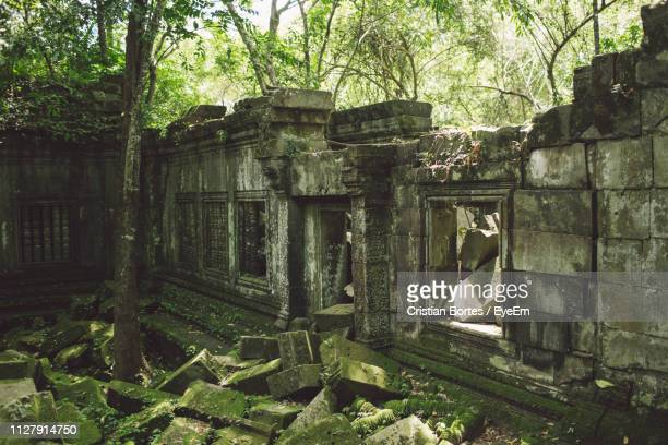 trees by broken wall at angkor wat - bortes stock pictures, royalty-free photos & images