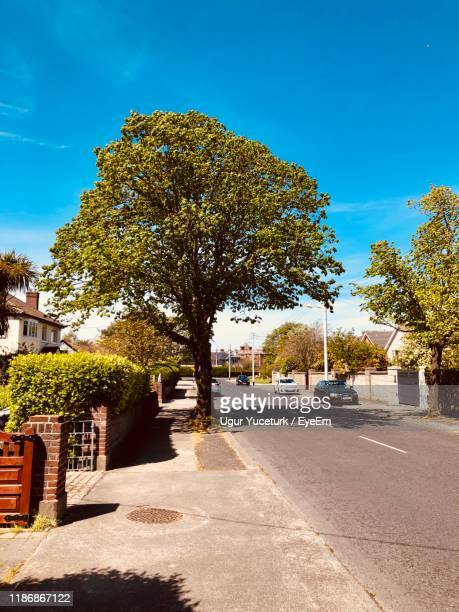 trees by building against sky - dalkey stock pictures, royalty-free photos & images