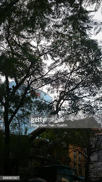 trees by buildings against sky - hong quan stock pictures, royalty-free photos & images