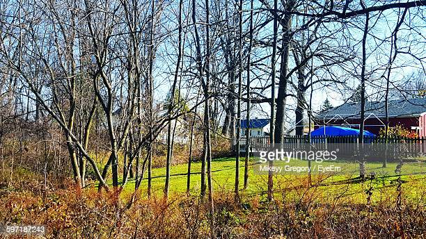 Trees By Houses At Backyard