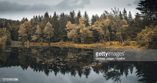 trees by lake against sky during autumn - michael jaeger stock pictures, royalty-free photos & images