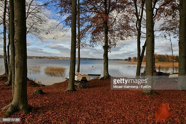trees by lake against sky - vaxjo stock pictures, royalty-free photos & images