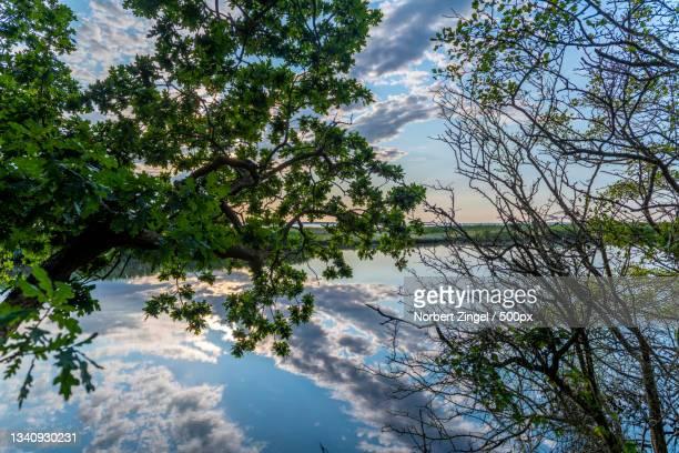 trees by lake against sky,nsg geltinger birk,germany - norbert zingel stock-fotos und bilder