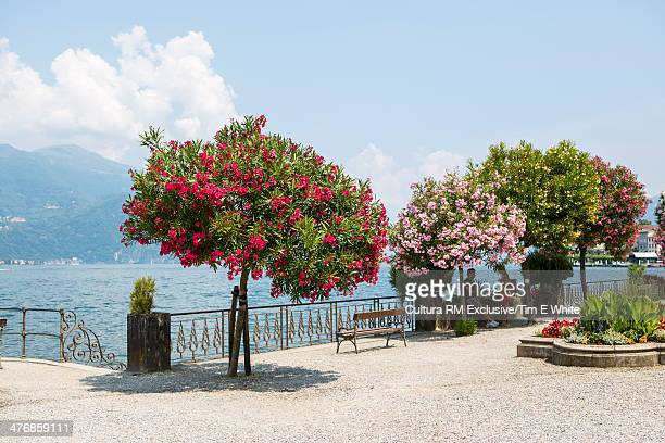 Trees by Lake Como, Bellagio, Italy