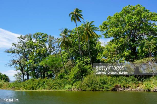 trees by lake in forest against clear sky - nicaragua fotografías e imágenes de stock
