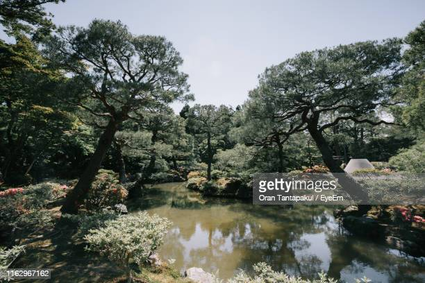 trees by lake in forest against sky - 日本庭園 ストックフォトと画像