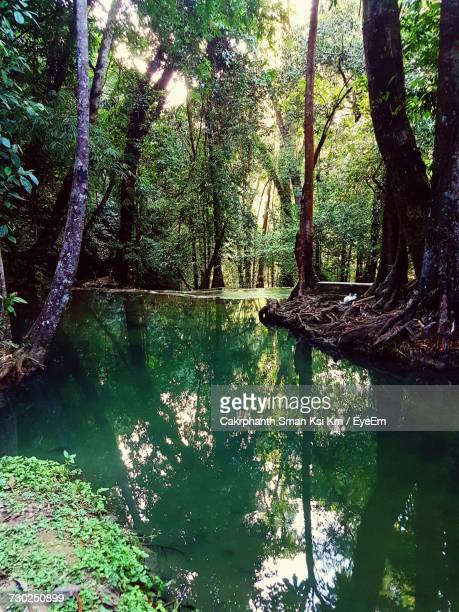 trees by lake in forest against sky - ksi stock photos and pictures