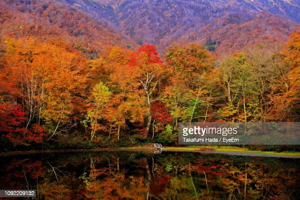 trees by lake in forest during autumn - fukui prefecture stock photos and pictures