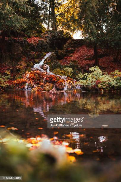 trees by lake in forest during autumn - monza stock pictures, royalty-free photos & images