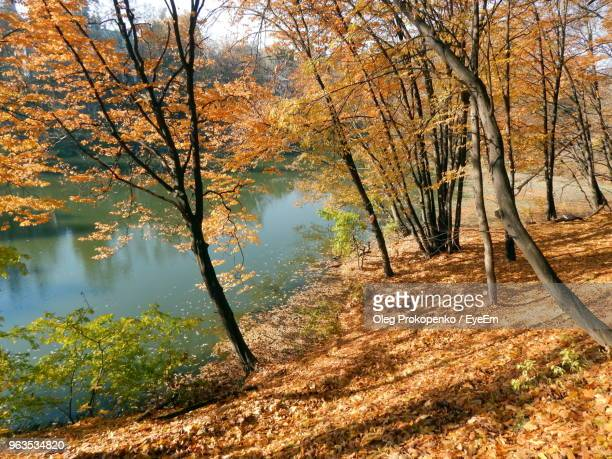 trees by lake in forest during autumn - oleg prokopenko stock pictures, royalty-free photos & images