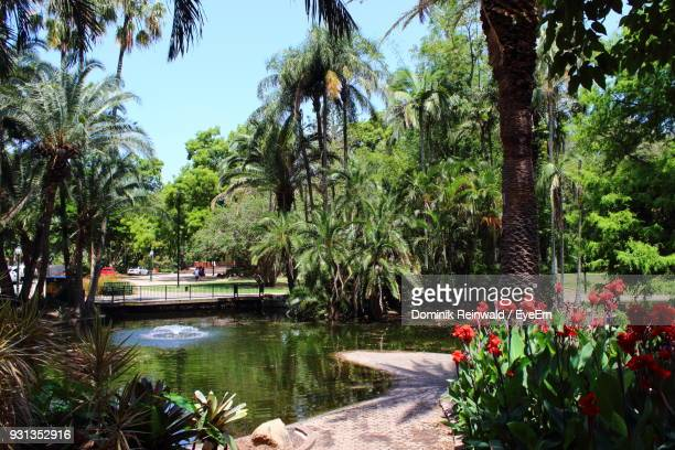 trees by lake in park - brisbane stock photos and pictures