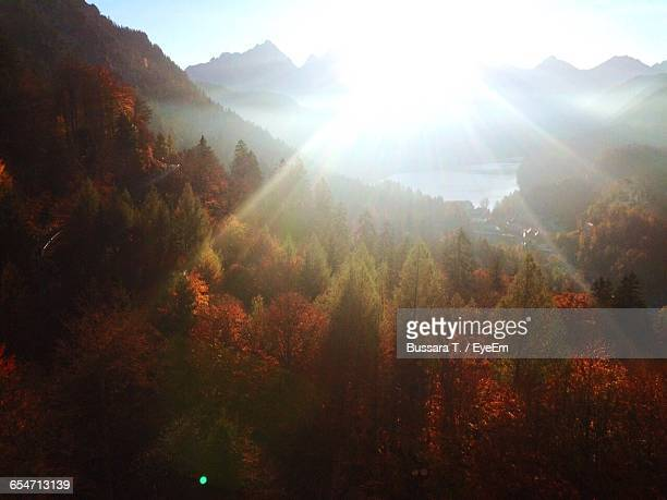 Trees By Mountain On Sunny Day During Autumn