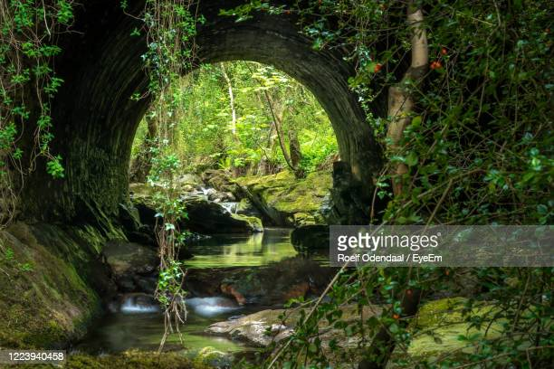 trees by river in forest seen through a tunnel - isle of man stock pictures, royalty-free photos & images