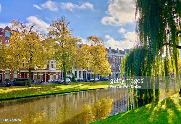 trees by river in park against sky in city - rotterdam stockfoto's en -beelden