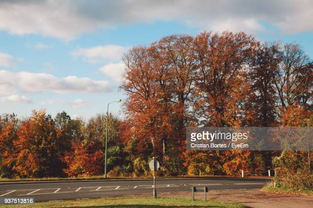 trees by road against sky during autumn - bortes stockfoto's en -beelden