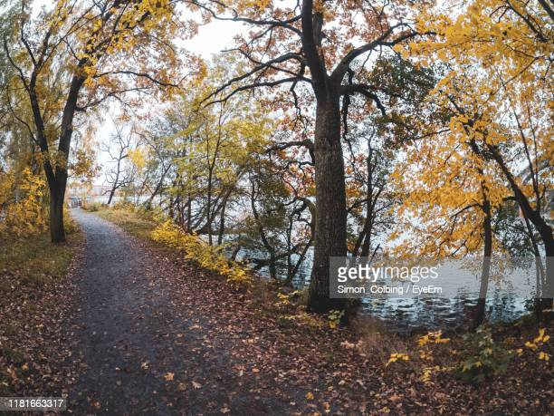 trees by road during autumn - colbing stock pictures, royalty-free photos & images