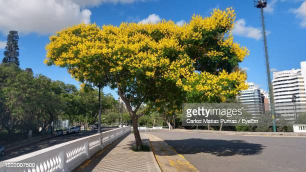 trees by road in city against sky - cordoba argentina stock pictures, royalty-free photos & images