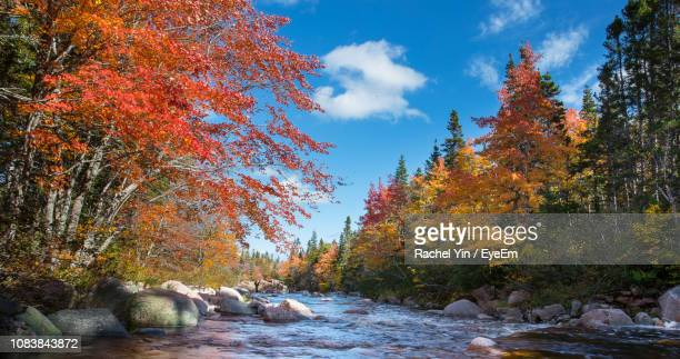 trees by rocks against sky during autumn - cape breton island stock pictures, royalty-free photos & images
