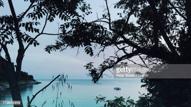 trees by sea against sky - boban stock pictures, royalty-free photos & images