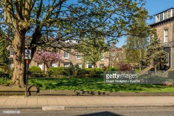 trees by street and buildings in city - harrogate stock pictures, royalty-free photos & images