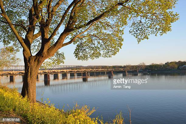 Trees by Susquehanna River