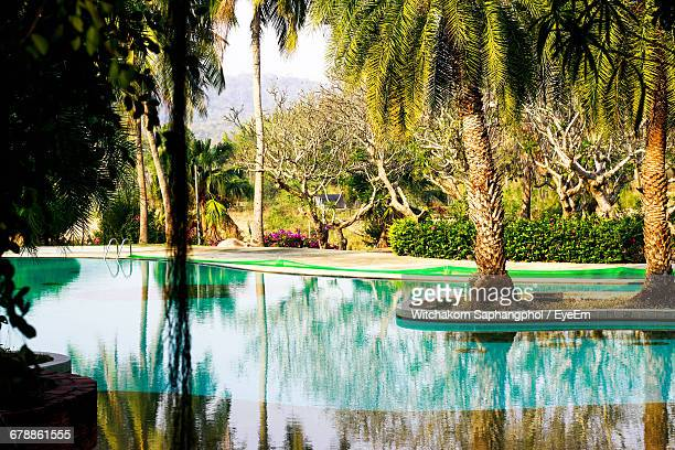 Trees By Swimming Pool At Resort