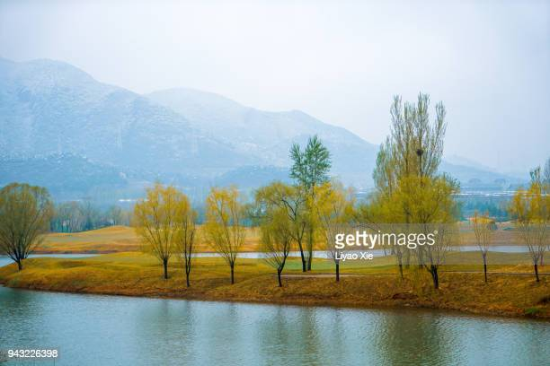 trees by the lake - liyao xie stock pictures, royalty-free photos & images