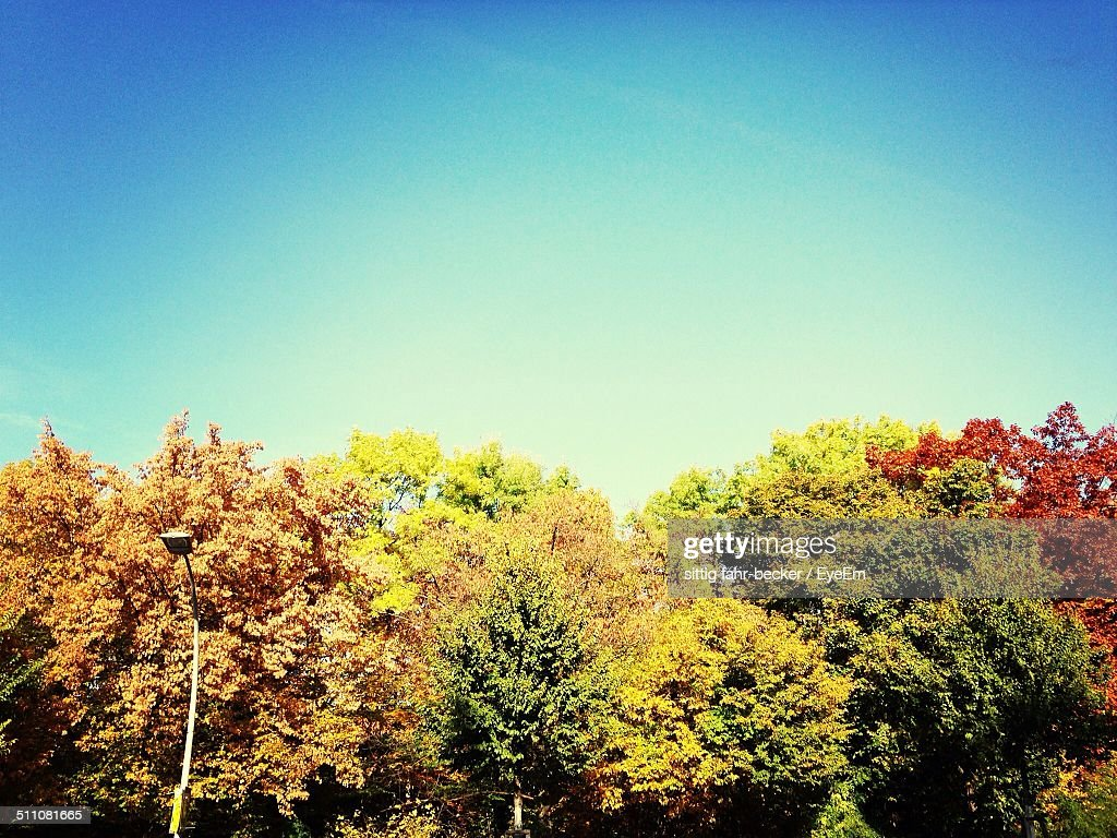 Trees Changing From Summer To Autumn Color Stock Photo | Getty Images