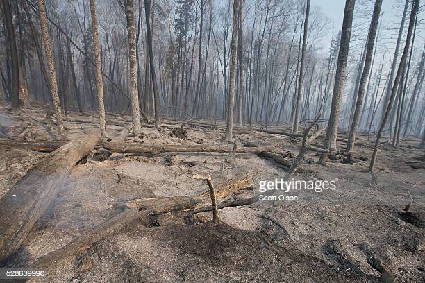 Trees charred by a wildfire continue to smolder along along Highway 63 on May 6 2016 in Fort McMurray Alberta Canada Wildfires which are still...