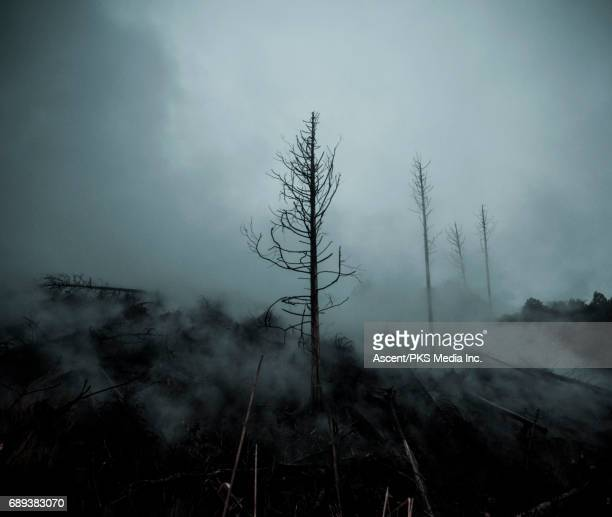 Trees clouded by snow and rising steam on mountainside.