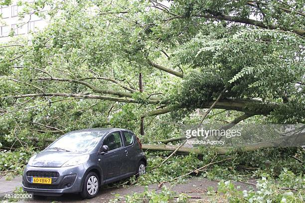 Trees, collapsed by the windstorm are seen in Lahey, Netherlands on July 25, 2015. Windstorm, with an average speed of 120 km/h affects daily life in...