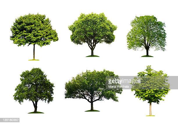 trees collection - plain background stock pictures, royalty-free photos & images
