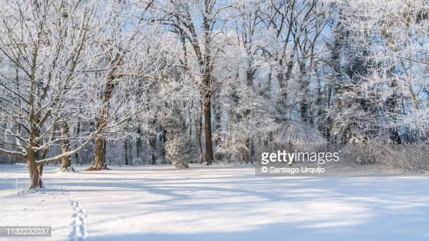 trees covered in frost in tervuren park - snow stock pictures, royalty-free photos & images