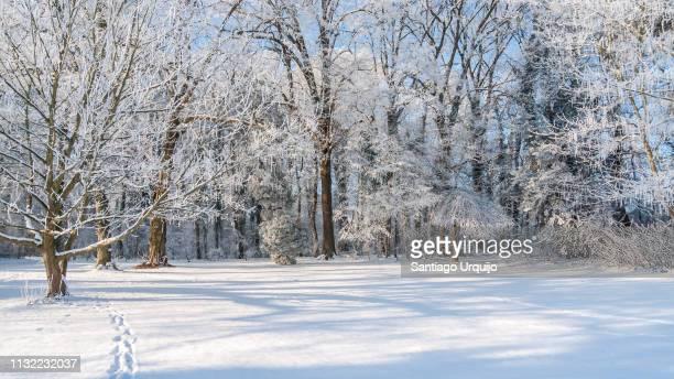 trees covered in frost in tervuren park - sneeuw stockfoto's en -beelden