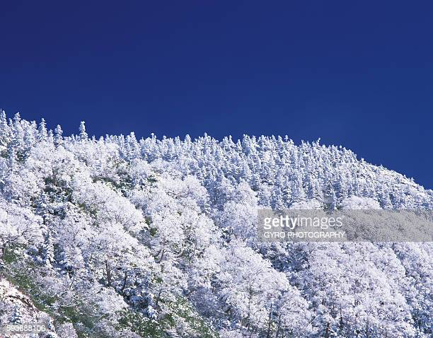 trees covered in frost - 八幡平市 ストックフォトと画像
