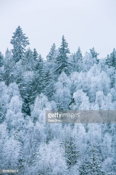 Trees covered in snow and frost, Norway