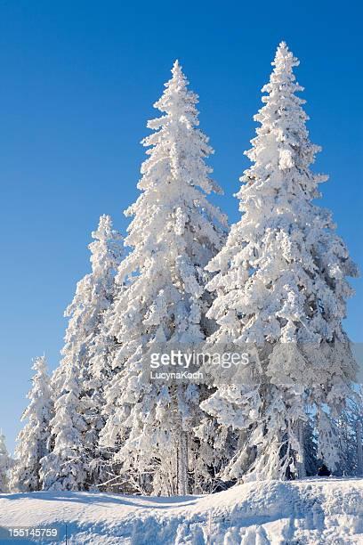 bäume im schnee bedeckt - lucyna koch stock-fotos und bilder