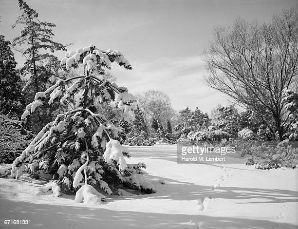 trees covered with snow - number of people stock pictures, royalty-free photos & images