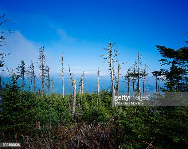 trees damaged from acid rain - acid rain stock pictures, royalty-free photos & images
