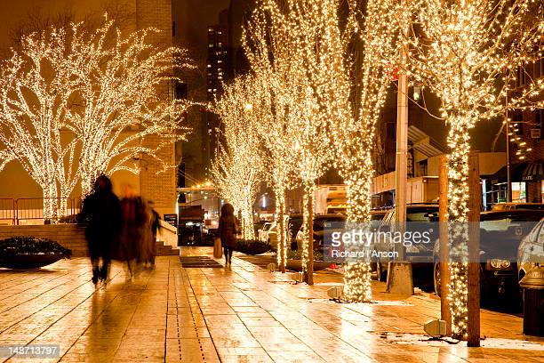Trees decorated with lights at night.